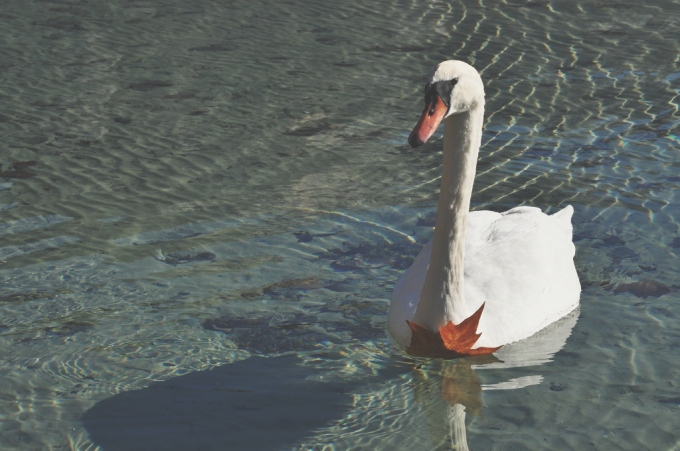 miss thelma -Lac d'Annecy